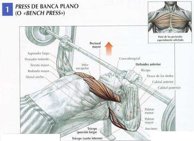 ejercicios musculacion